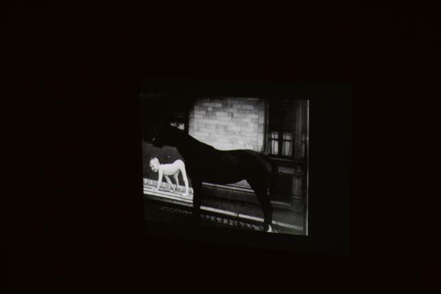 exposition-romaric-tisserand-eadweard-muybridge-icaar-lamarck-galerie-jour-agnesb-vintage-photography--IMG_2945